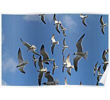 Flock of Gulls Poster