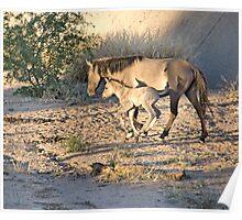 Desert Wild Horses Poster