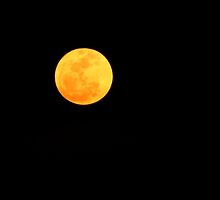 Super Moon by Terri~Lynn Bealle