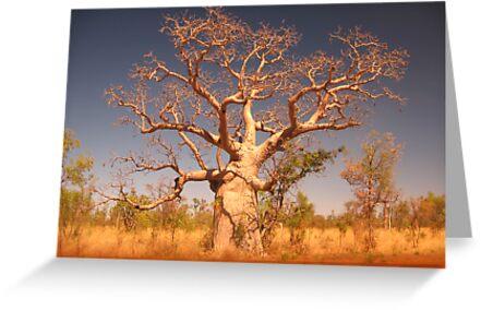 Kimberley Boab Tree. by Nada  Pantle