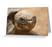 Galapagos Greeting Card