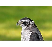 Goshawk Photographic Print
