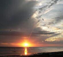 Heron Sunset by melodyart