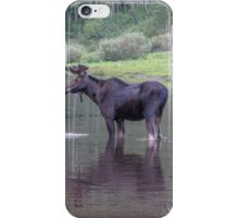 Moose at Maroon Bells, Aspen iPhone Case/Skin