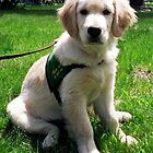 The Sitting Assistance Dog by genevaspecials