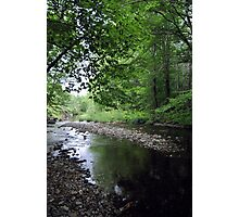 Quiet Brook Photographic Print