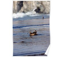 Wildlife - South of Morrow Bay, CA, USA; Photography by Lei Hedger Poster
