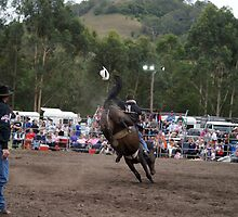 Picton Rodeo BRONC3 by Sharon Robertson