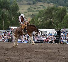 Picton Rodeo BRONC4 by Sharon Robertson