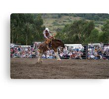 Picton Rodeo BRONC4 Canvas Print