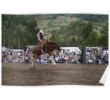 Picton Rodeo BRONC4 Poster