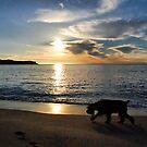 Sunrise at Pearl Beach by andreisky