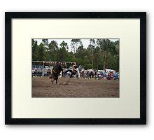 Picton Rodeo BULL1 Framed Print