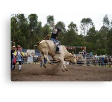 Picton Rodeo BULL2 Canvas Print