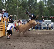 Picton Rodeo BULL4 by Sharon Robertson