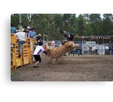 Picton Rodeo BULL4 Canvas Print