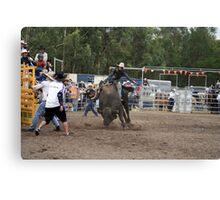 Picton Rodeo BULL5 Canvas Print