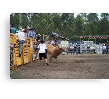 Picton Rodeo BULL6 Canvas Print
