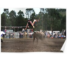 Picton Rodeo BULL7 Poster