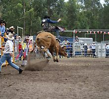 Picton Rodeo BULL8 by Sharon Robertson