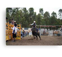 Picton Rodeo BULL9 Canvas Print