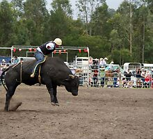 Picton Rodeo BULL10 by Sharon Robertson