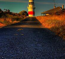 Guiding Light by Steven Maynard