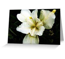 Pale yellow Iris  Greeting Card