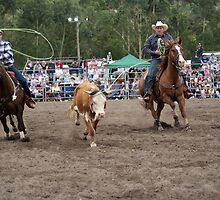 Picton Rodeo ROPE10 by Sharon Robertson