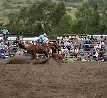 Picton Rodeo ROPE12 by Sharon Robertson