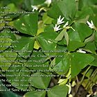 Prayer of St. Patrick by WalnutHill