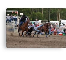 Picton Rodeo STEER3 Canvas Print