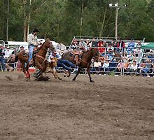 Picton Rodeo STEER7 by Sharon Robertson