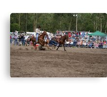 Picton Rodeo STEER7 Canvas Print