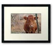 The Red Cow Framed Print