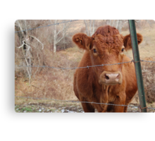 The Red Cow Canvas Print