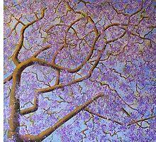 Purple Rain by Wendy Sinclair
