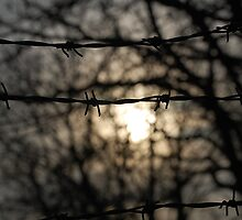 barbed wire sun by funkybunch