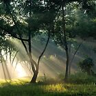 Ray of life  by Mark Lee