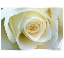 White tenderness Poster