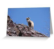 Babies- Springtime Rocky Mountain Sheep Greeting Card