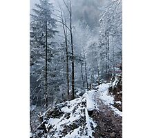 white forest Photographic Print