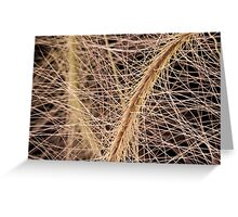 Fox Tail Grass Macro Greeting Card