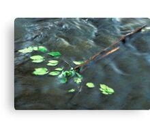 Elm Leaves in Water Canvas Print