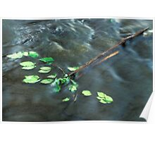 Elm Leaves in Water Poster