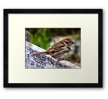 SONG BIRD WAITING FOR A FRIEND Framed Print