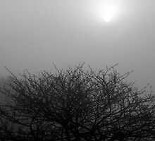 Fog, Tree & Sun by Bill Spengler