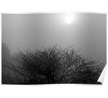 Fog, Tree & Sun Poster