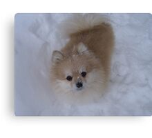 Max the Snow Pom Canvas Print