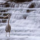 Heron on the Rouge by Bill Spengler